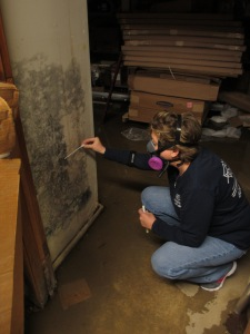 Cathy Ledden of Coastal Environmental Compliance  equips her gas mask to swab dangerous Stachybotrys mold (better known as Black Mold) off of a wall.